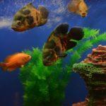 Dalğa balıq restoranı
