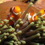 Zoo Nemo