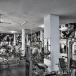 Elephant Masters Gym